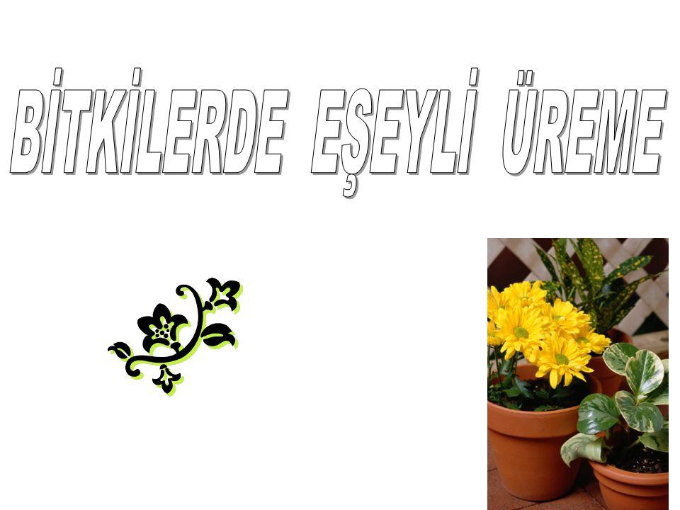 •Çiçeğin içte kalan son bölümü dişi organdır.dişi organları meydana getiren değişime uğramış yapraklara meyve yaprakları denir.