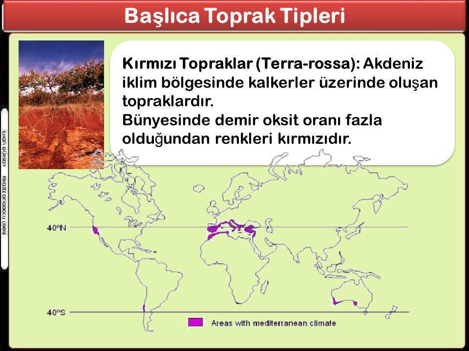 Kırmızı Topraklar (Terra-rossa): Akdeniz iklim bölgesinde kalkerler üzerinde olu ş an topraklardır. Bünyesinde demir oksit oranı fazla oldu ğ undan re