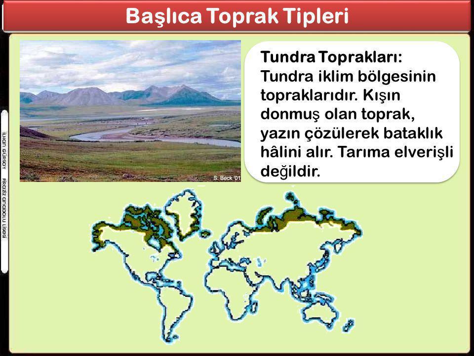 Tundra Toprakları: Tundra iklim bölgesinin topraklarıdır. Kı ş ın donmu ş olan toprak, yazın çözülerek bataklık hâlini alır. Tarıma elveri ş li de ğ i