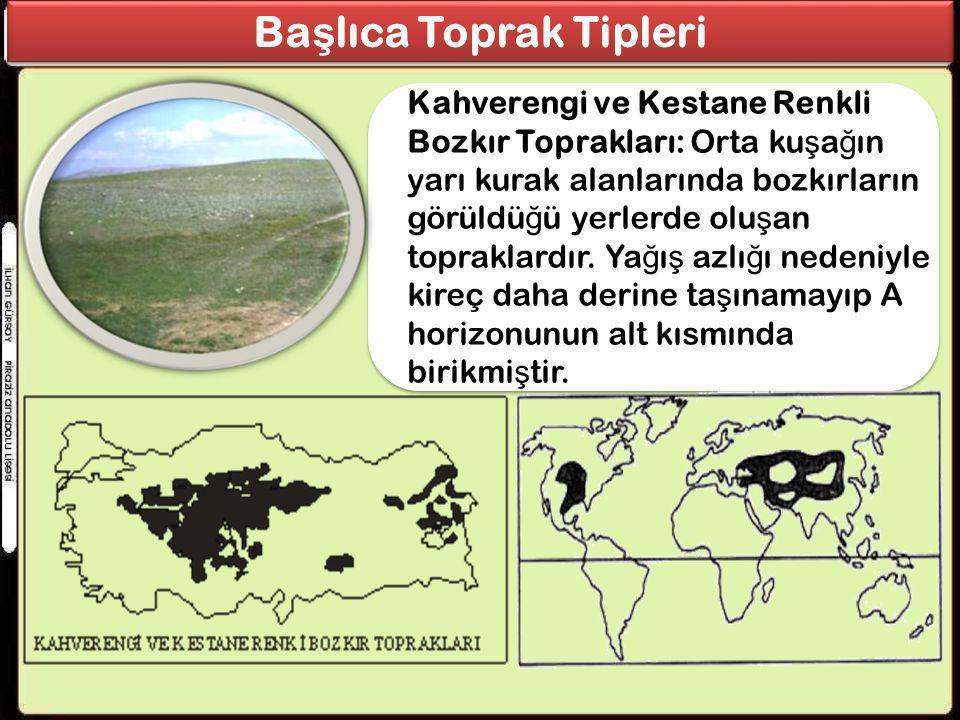 Ba ş lıca Toprak Tipleri Kahverengi ve Kestane Renkli Bozkır Toprakları: Orta ku ş a ğ ın yarı kurak alanlarında bozkırların görüldü ğ ü yerlerde olu