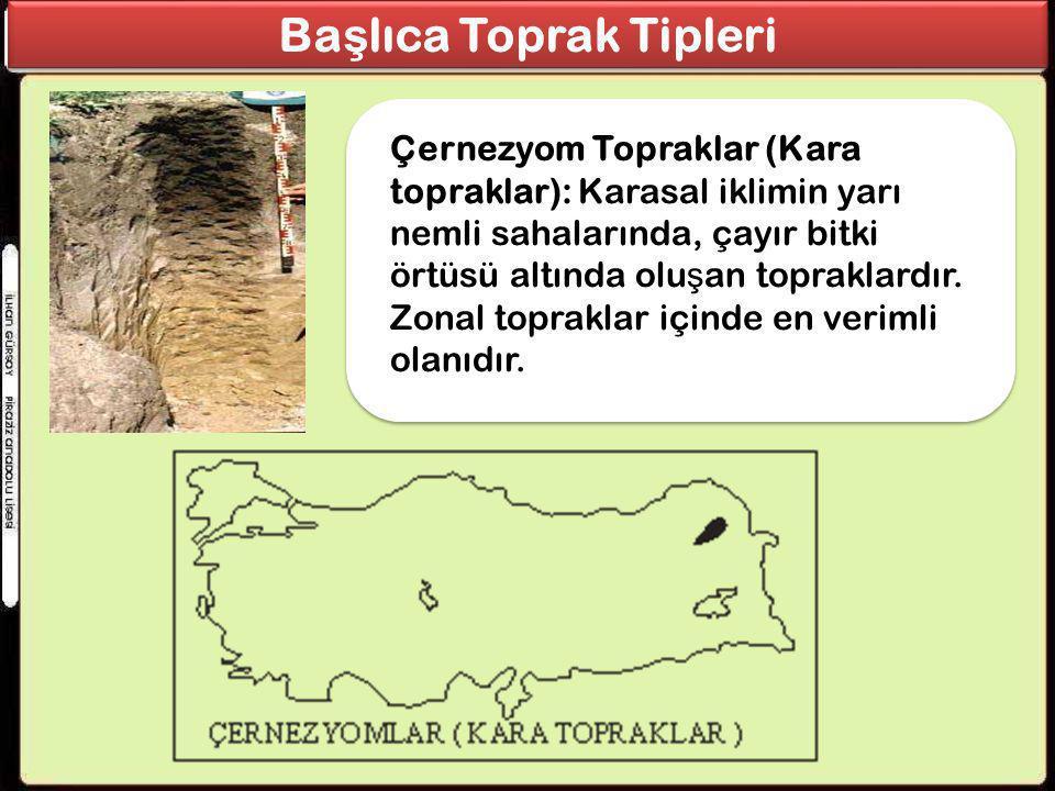 Ba ş lıca Toprak Tipleri Çernezyom Topraklar (Kara topraklar): Karasal iklimin yarı nemli sahalarında, çayır bitki örtüsü altında olu ş an topraklardı