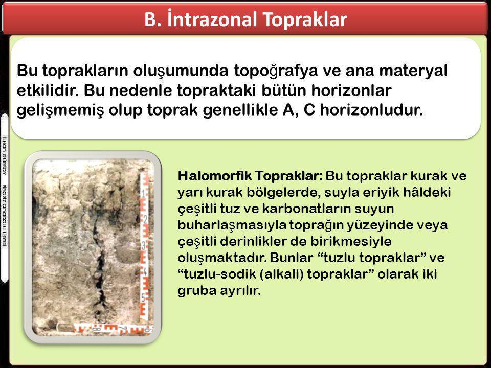 B. İntrazonal Topraklar Bu toprakların olu ş umunda topo ğ rafya ve ana materyal etkilidir. Bu nedenle topraktaki bütün horizonlar geli ş memi ş olup