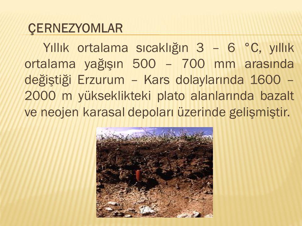 ÇERNEZYOMLAR Yıllık ortalama sıcaklığın 3 – 6 °C, yıllık ortalama yağışın 500 – 700 mm arasında değiştiği Erzurum – Kars dolaylarında 1600 – 2000 m yü