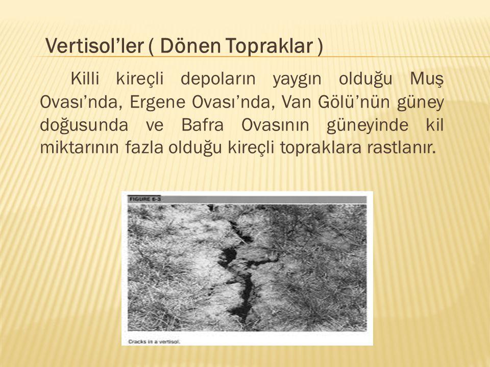 Vertisol'ler ( Dönen Topraklar ) Killi kireçli depoların yaygın olduğu Muş Ovası'nda, Ergene Ovası'nda, Van Gölü'nün güney doğusunda ve Bafra Ovasının