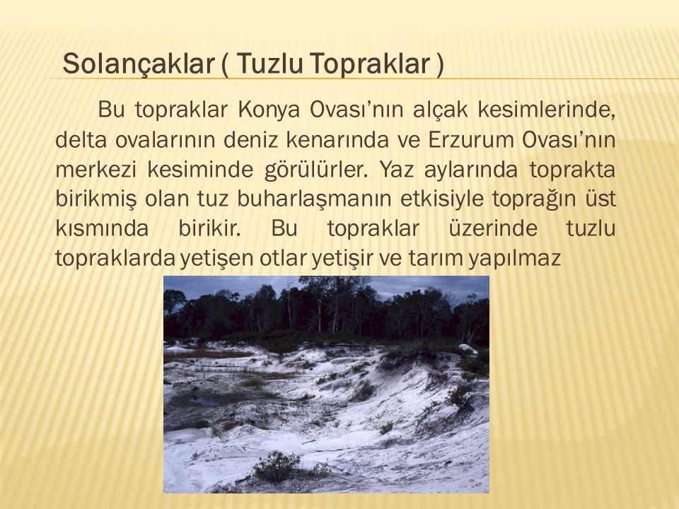 Solançaklar ( Tuzlu Topraklar ) Bu topraklar Konya Ovası'nın alçak kesimlerinde, delta ovalarının deniz kenarında ve Erzurum Ovası'nın merkezi kesimin