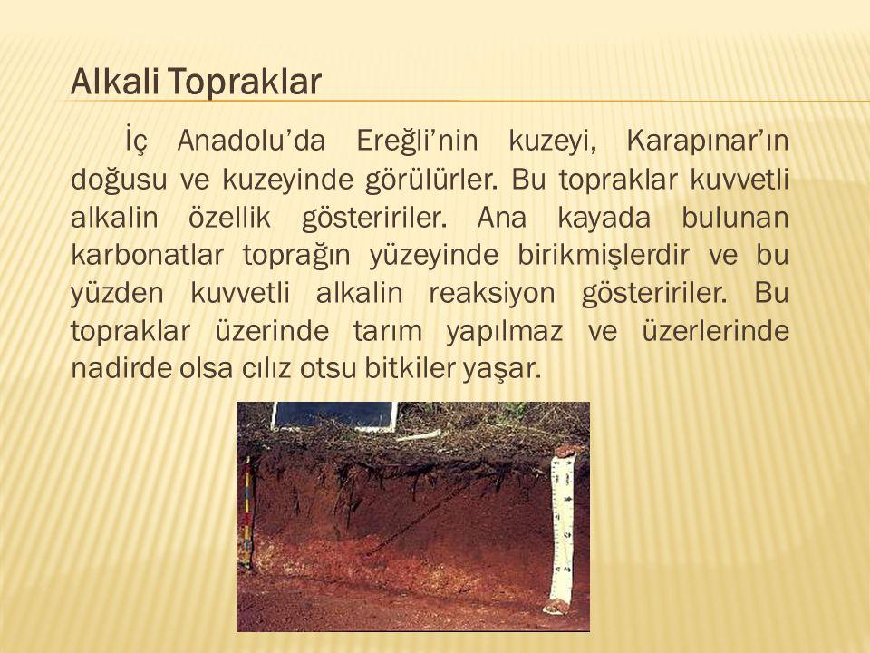Alkali Topraklar İç Anadolu'da Ereğli'nin kuzeyi, Karapınar'ın doğusu ve kuzeyinde görülürler. Bu topraklar kuvvetli alkalin özellik gösteririler. Ana