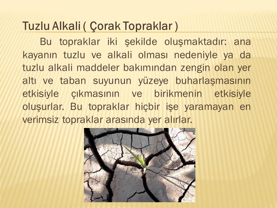 Tuzlu Alkali ( Çorak Topraklar ) Bu topraklar iki şekilde oluşmaktadır: ana kayanın tuzlu ve alkali olması nedeniyle ya da tuzlu alkali maddeler bakım