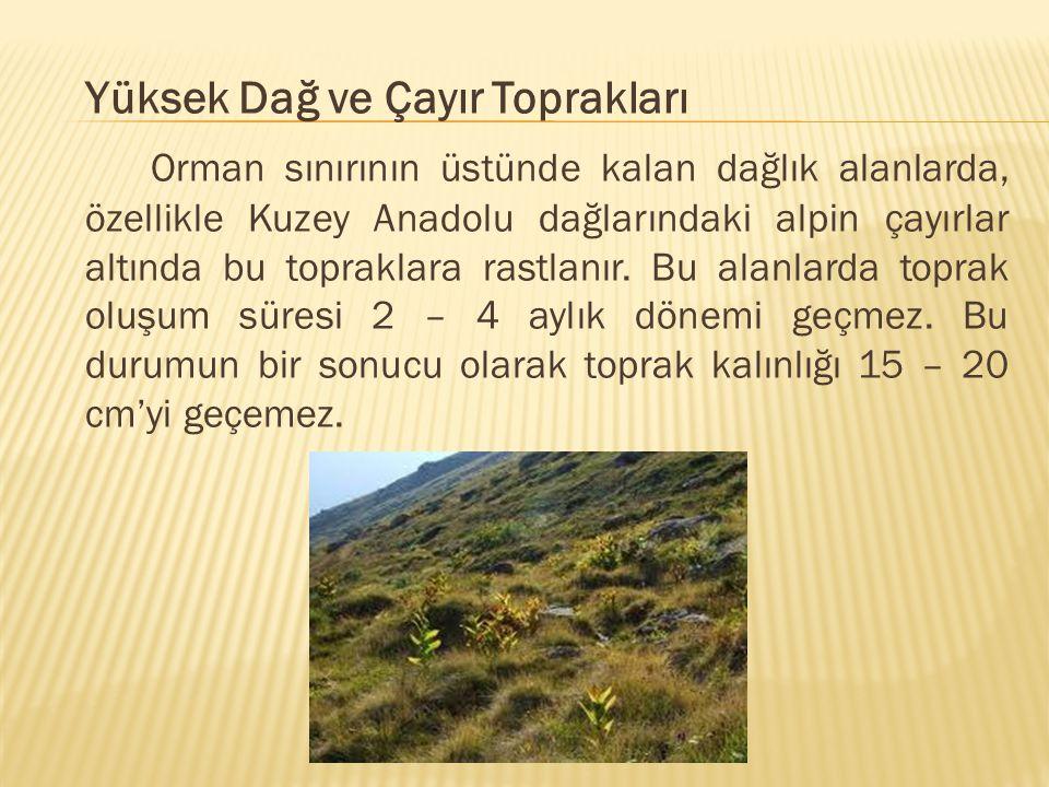 Yüksek Dağ ve Çayır Toprakları Orman sınırının üstünde kalan dağlık alanlarda, özellikle Kuzey Anadolu dağlarındaki alpin çayırlar altında bu toprakla
