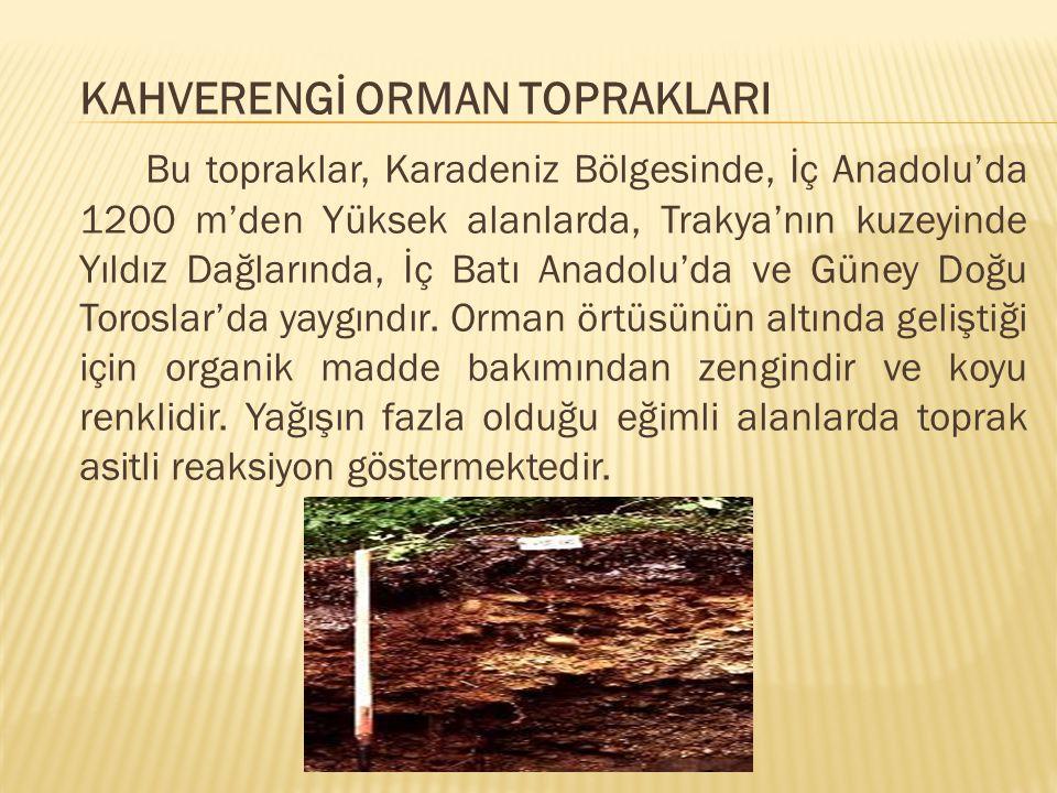 KAHVERENGİ ORMAN TOPRAKLARI Bu topraklar, Karadeniz Bölgesinde, İç Anadolu'da 1200 m'den Yüksek alanlarda, Trakya'nın kuzeyinde Yıldız Dağlarında, İç