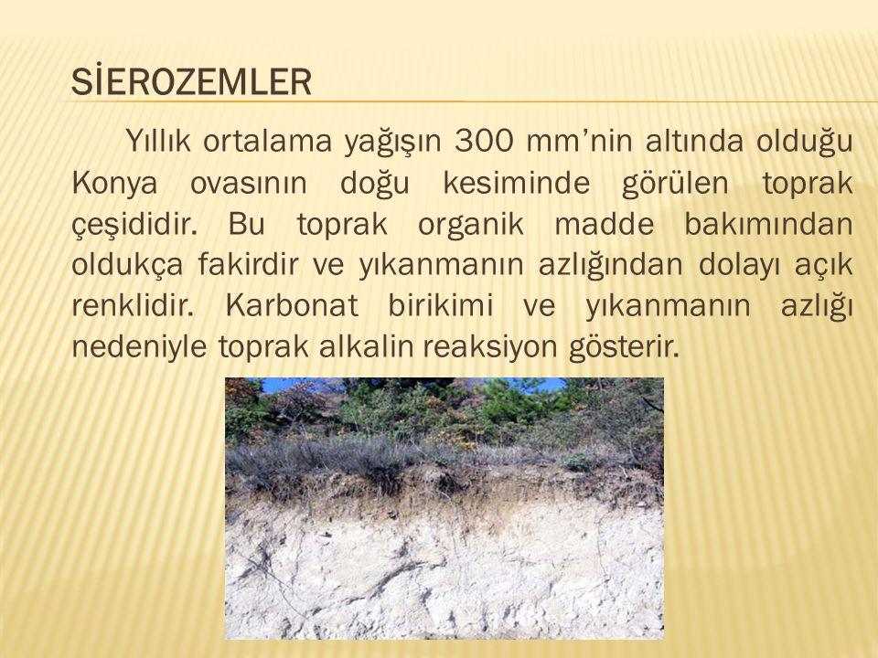 SİEROZEMLER Yıllık ortalama yağışın 300 mm'nin altında olduğu Konya ovasının doğu kesiminde görülen toprak çeşididir. Bu toprak organik madde bakımınd