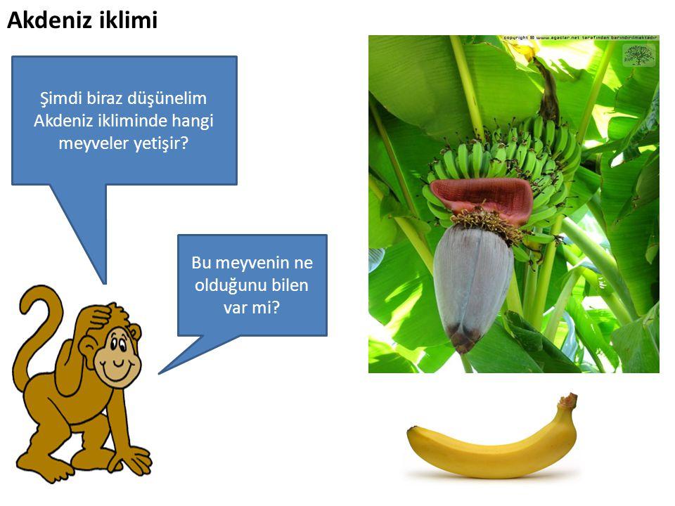 Şimdi biraz düşünelim Akdeniz ikliminde hangi meyveler yetişir? Bu meyvenin ne olduğunu bilen var mi?