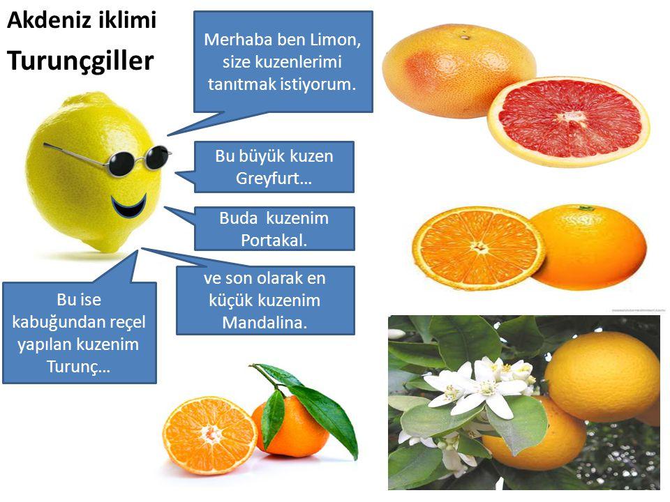 Akdeniz iklimi Turunçgiller Merhaba ben Limon, size kuzenlerimi tanıtmak istiyorum. Bu büyük kuzen Greyfurt… Buda kuzenim Portakal. Bu ise kabuğundan