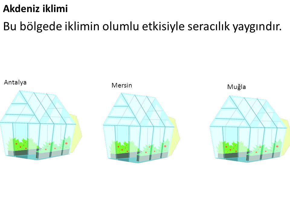 Akdeniz iklimi Bu bölgede iklimin olumlu etkisiyle seracılık yaygındır. Antalya Mersin Muğla