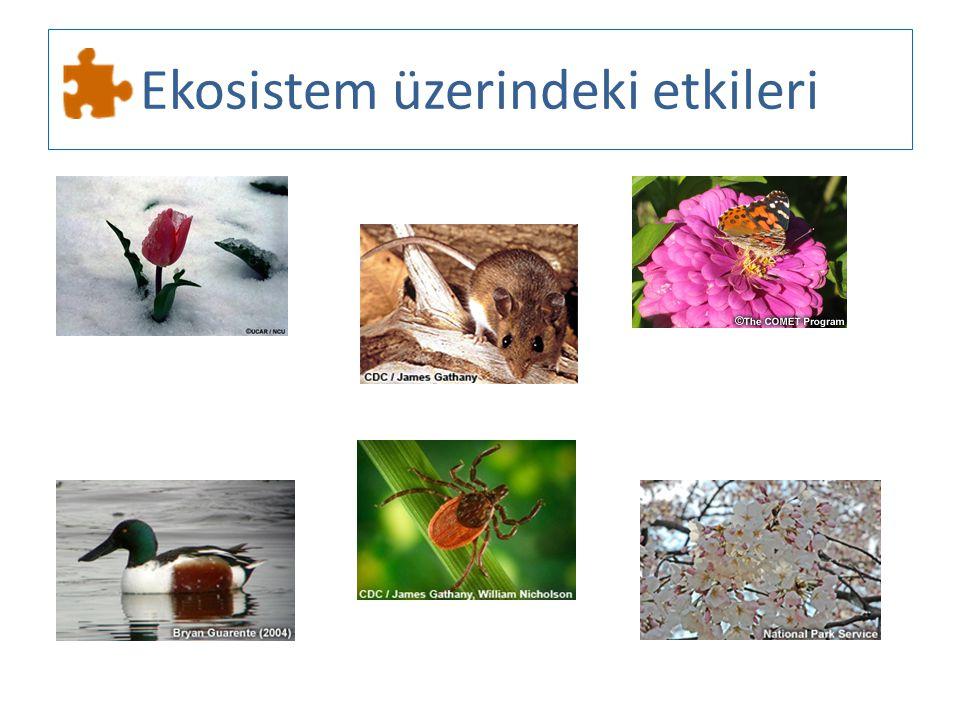 Ekosistem üzerindeki etkileri