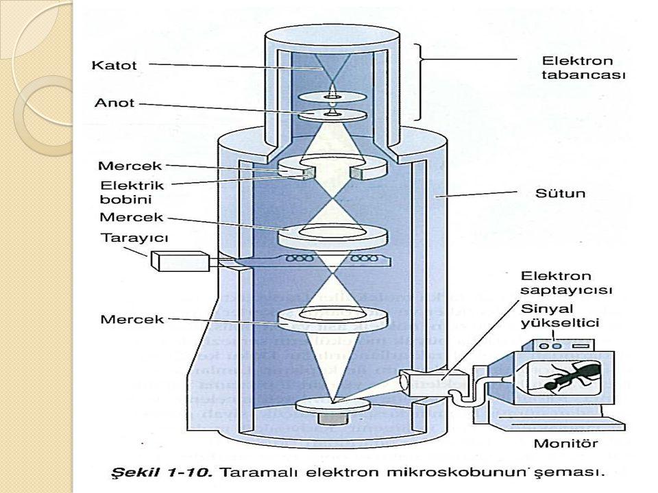  Mikroskobun büyütmesi şu şekilde hesaplanır: M İ KROSKOP BÜYÜTMES İ = OKÜLER X OBJEKT İ F (Örne ğ in oküler 5x, objektif 40x olan bir mikroskobun büyütmesi = 5 X 40 = 200 olur.)