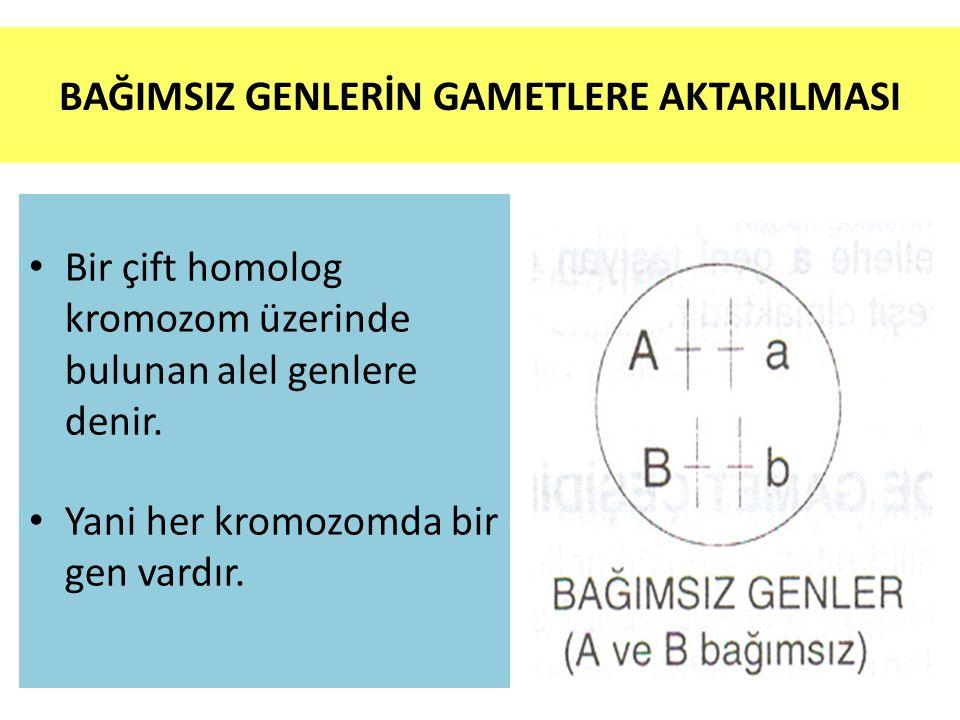 BAĞIMSIZ GENLERİN GAMETLERE AKTARILMASI • Bir çift homolog kromozom üzerinde bulunan alel genlere denir.