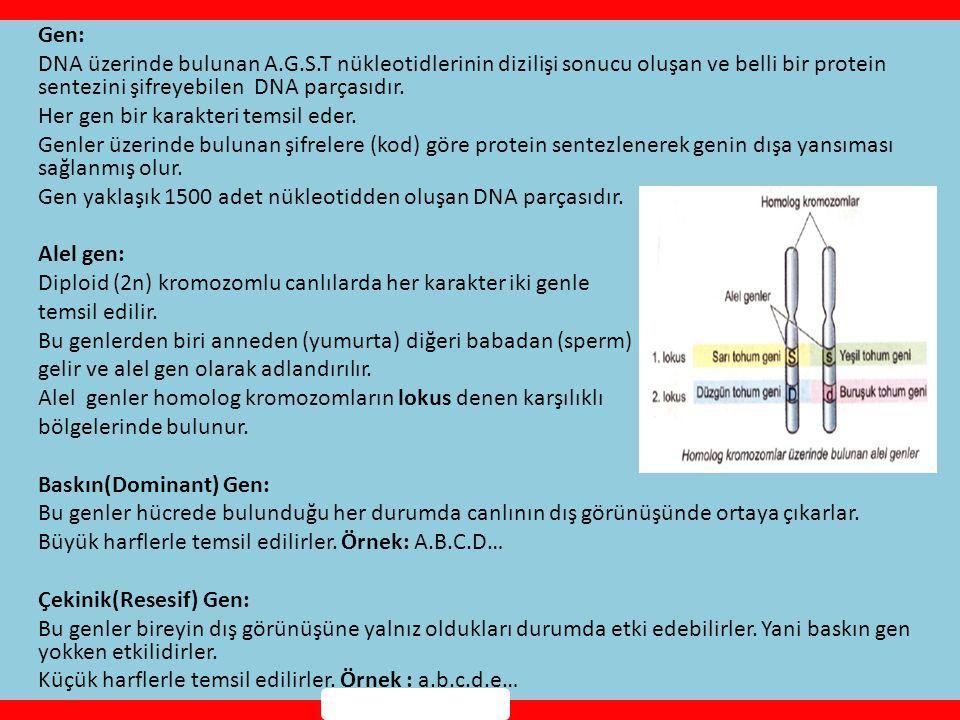 Gen: DNA üzerinde bulunan A.G.S.T nükleotidlerinin dizilişi sonucu oluşan ve belli bir protein sentezini şifreyebilen DNA parçasıdır.