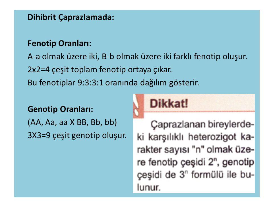 Dihibrit Çaprazlamada: Fenotip Oranları: A-a olmak üzere iki, B-b olmak üzere iki farklı fenotip oluşur.