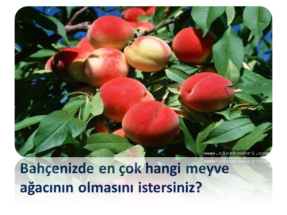 Bahçenizde en çok hangi meyve ağacının olmasını istersiniz?
