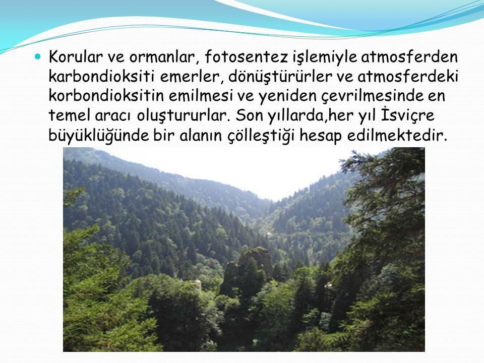  Korular ve ormanlar, fotosentez işlemiyle atmosferden karbondioksiti emerler, dönüştürürler ve atmosferdeki korbondioksitin emilmesi ve yeniden çevr