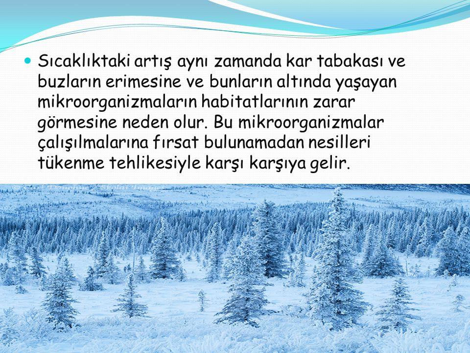  Sıcaklıktaki artış aynı zamanda kar tabakası ve buzların erimesine ve bunların altında yaşayan mikroorganizmaların habitatlarının zarar görmesine neden olur.