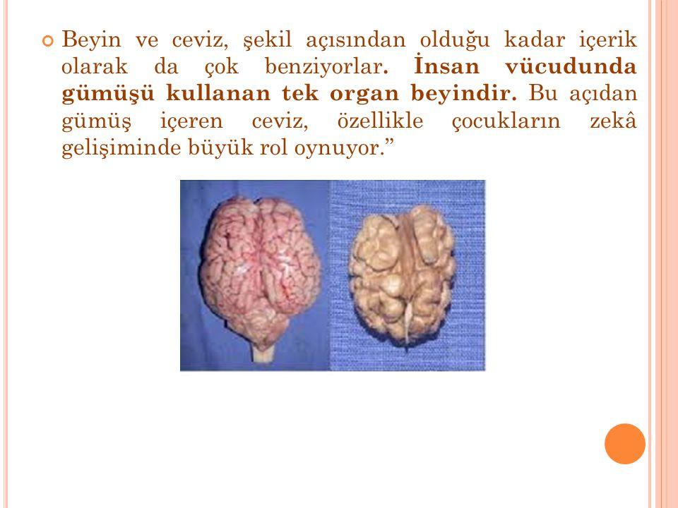 Cevizdeki gümüşün, beynin sağ ve sol tarafındaki bilgi alışverişinin hızını artırdığı belirtiliyor Fazla ceviz tüketenlerde zeka gelişiminin yüksek olduğu bir gerçek.