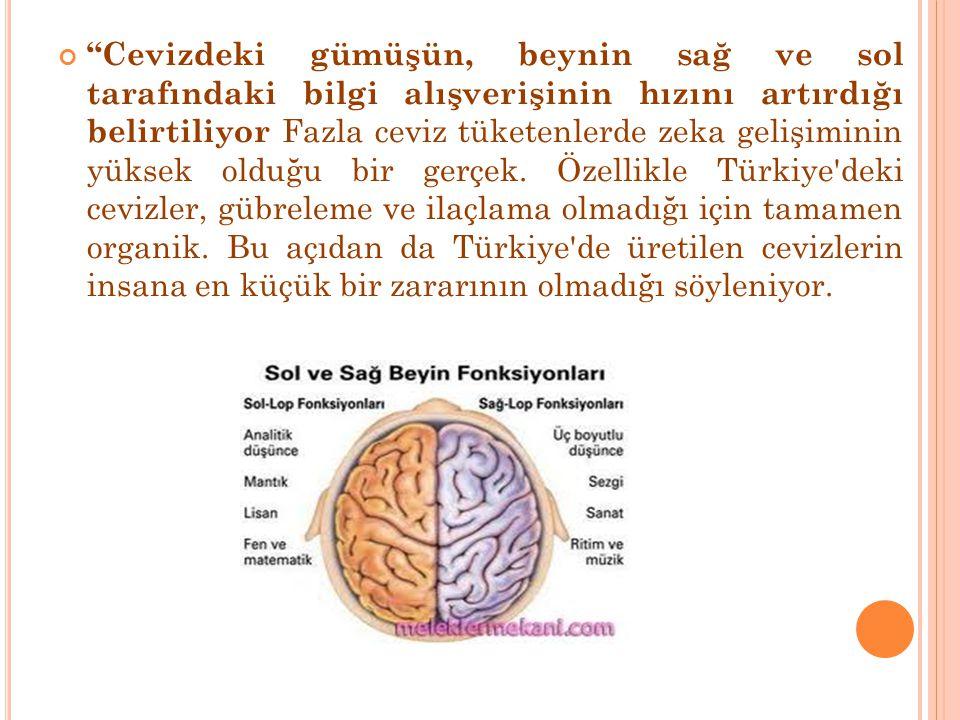 """""""Cevizdeki gümüşün, beynin sağ ve sol tarafındaki bilgi alışverişinin hızını artırdığı belirtiliyor Fazla ceviz tüketenlerde zeka gelişiminin yüksek o"""