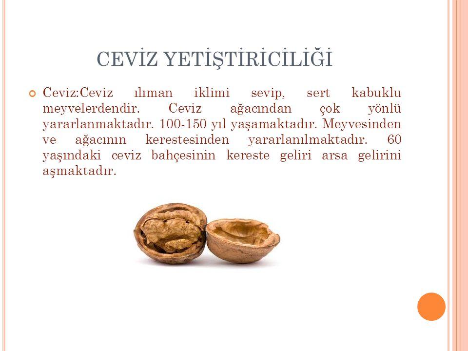 CEVİZ Ceviz B ve D vitaminlerince çok zengin olup, A,C ve E vitaminlerini de içermektedir.
