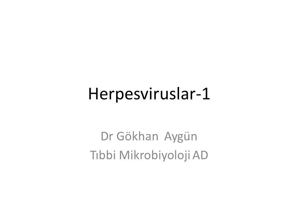 Herpesviruslar-1 Dr Gökhan Aygün Tıbbi Mikrobiyoloji AD