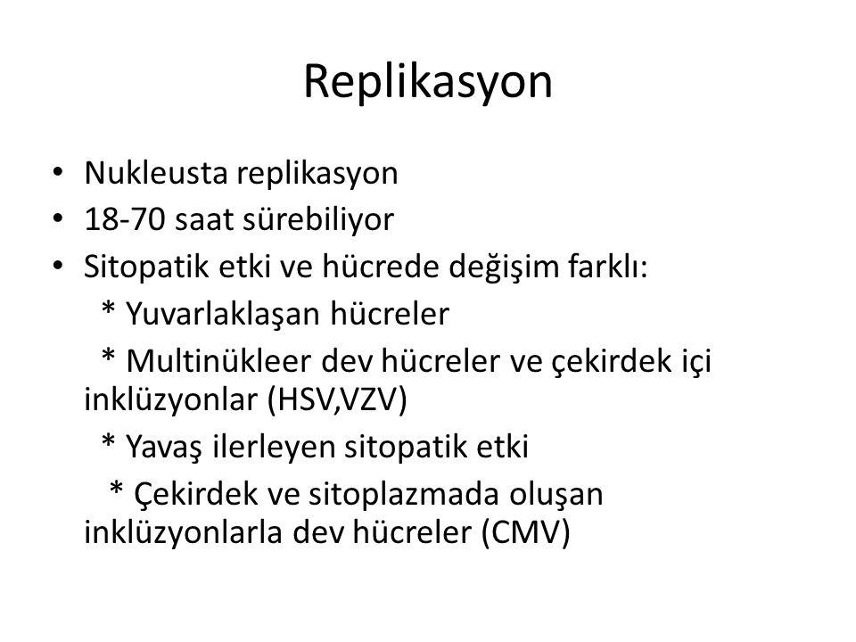 Replikasyon • Nukleusta replikasyon • 18-70 saat sürebiliyor • Sitopatik etki ve hücrede değişim farklı: * Yuvarlaklaşan hücreler * Multinükleer dev hücreler ve çekirdek içi inklüzyonlar (HSV,VZV) * Yavaş ilerleyen sitopatik etki * Çekirdek ve sitoplazmada oluşan inklüzyonlarla dev hücreler (CMV)