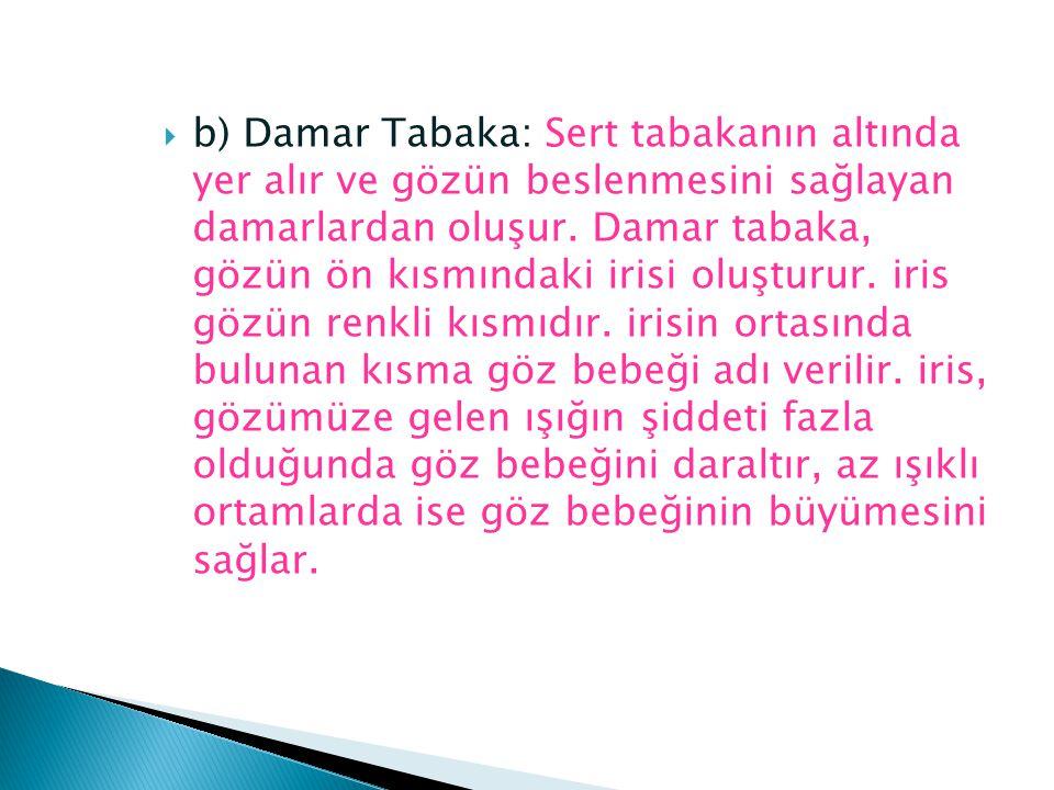  b) Damar Tabaka: Sert tabakanın altında yer alır ve gözün beslenmesini sağlayan damarlardan oluşur. Damar tabaka, gözün ön kısmındaki irisi oluşturu