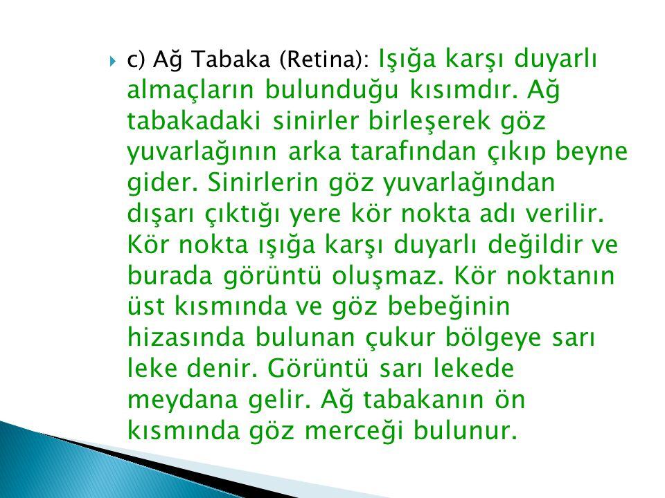  c) Ağ Tabaka (Retina): Işığa karşı duyarlı almaçların bulunduğu kısımdır. Ağ tabakadaki sinirler birleşerek göz yuvarlağının arka tarafından çıkıp b