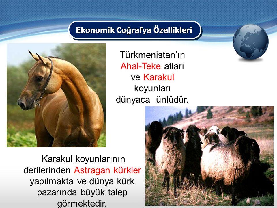 Karakul koyunlarının derilerinden Astragan kürkler yapılmakta ve dünya kürk pazarında büyük talep görmektedir. Türkmenistan'ın Ahal-Teke atları ve Kar
