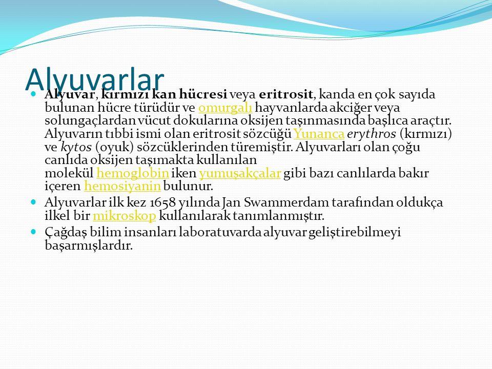 Alyuvarlar  Alyuvar, kırmızı kan hücresi veya eritrosit, kanda en çok sayıda bulunan hücre türüdür ve omurgalı hayvanlarda akciğer veya solungaçlarda