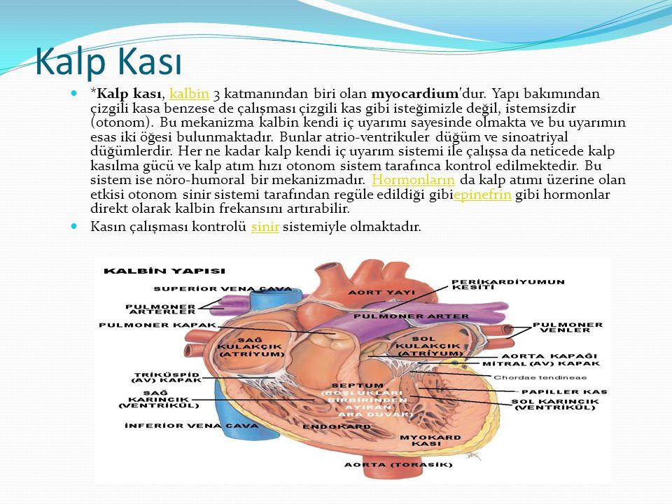 Kalp Kası  *Kalp kası, kalbin 3 katmanından biri olan myocardium'dur. Yapı bakımından çizgili kasa benzese de çalışması çizgili kas gibi isteğimizle