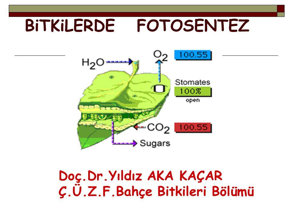 BiTKiLERDE FOTOSENTEZ Doç.Dr.Yıldız AKA KAÇAR Ç.Ü.Z.F.Bahçe Bitkileri Bölümü