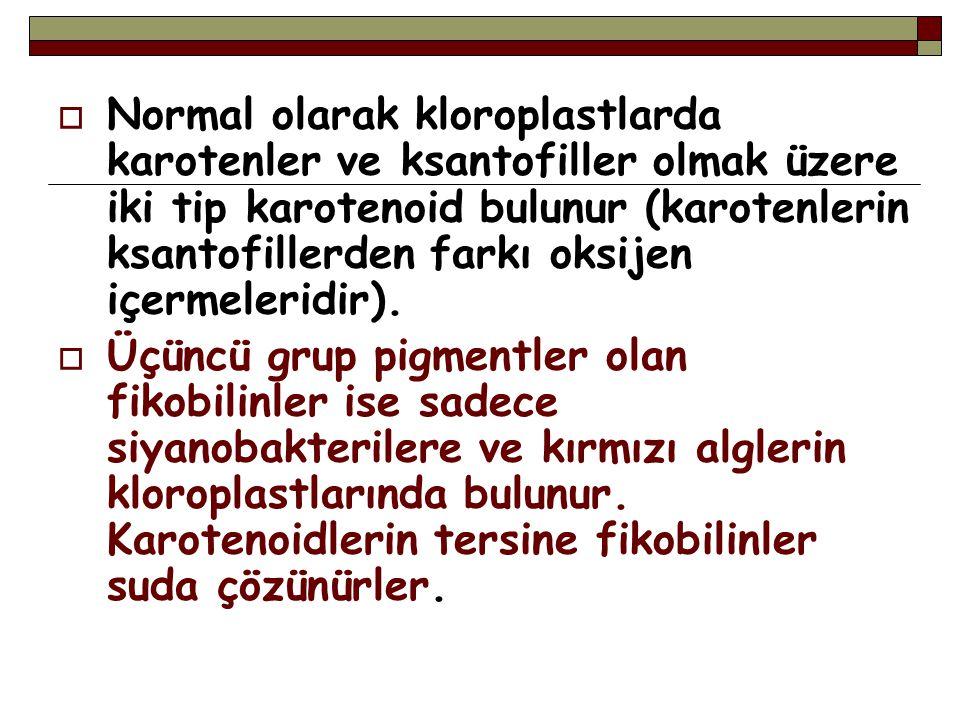  Normal olarak kloroplastlarda karotenler ve ksantofiller olmak üzere iki tip karotenoid bulunur (karotenlerin ksantofillerden farkı oksijen içermele