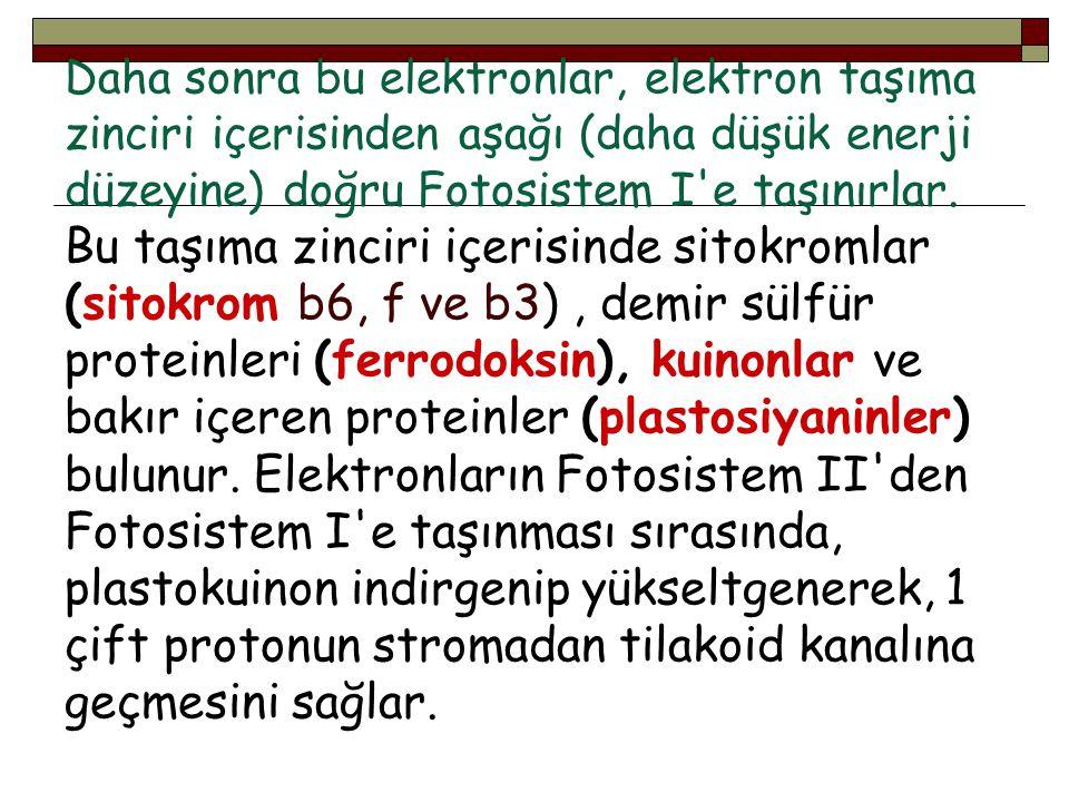 Daha sonra bu elektronlar, elektron taşıma zinciri içerisinden aşağı (daha düşük enerji düzeyine) doğru Fotosistem I'e taşınırlar. Bu taşıma zinciri i