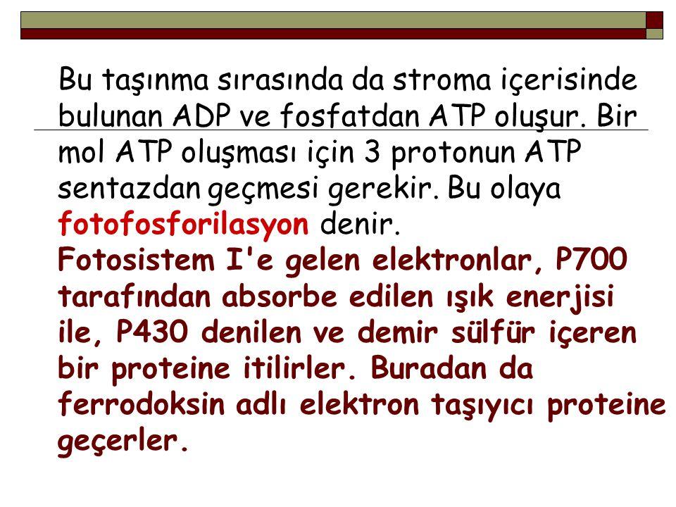 Bu taşınma sırasında da stroma içerisinde bulunan ADP ve fosfatdan ATP oluşur. Bir mol ATP oluşması için 3 protonun ATP sentazdan geçmesi gerekir. Bu