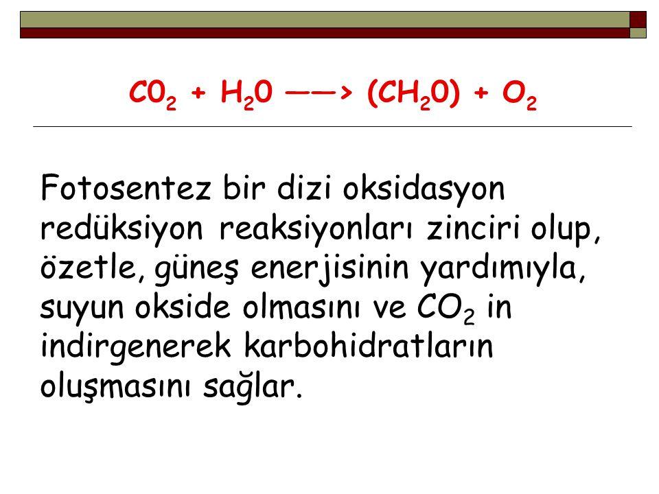 Fotosentezin ilk aşaması olan ışık reaksiyonlarında, ışık enerjisi ve su, ADP den ATP oluşumunda ve elektron taşıyıcı moleküllerin indirgenmesinde (NADP+—>NADPH 2 ) kullanılır.