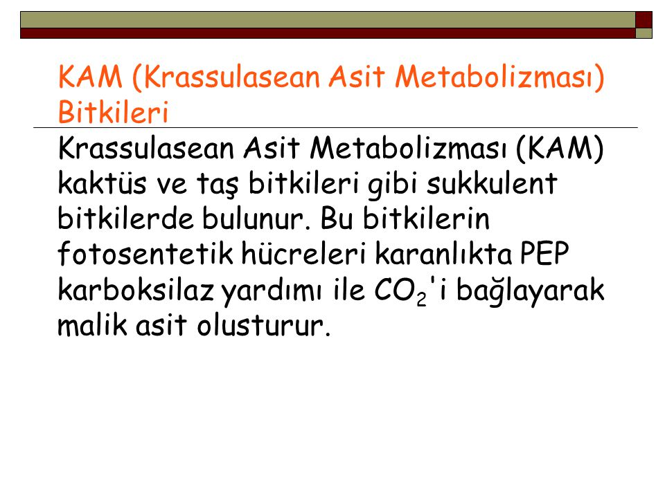 KAM (Krassulasean Asit Metabolizması) Bitkileri Krassulasean Asit Metabolizması (KAM) kaktüs ve taş bitkileri gibi sukkulent bitkilerde bulunur. Bu bi