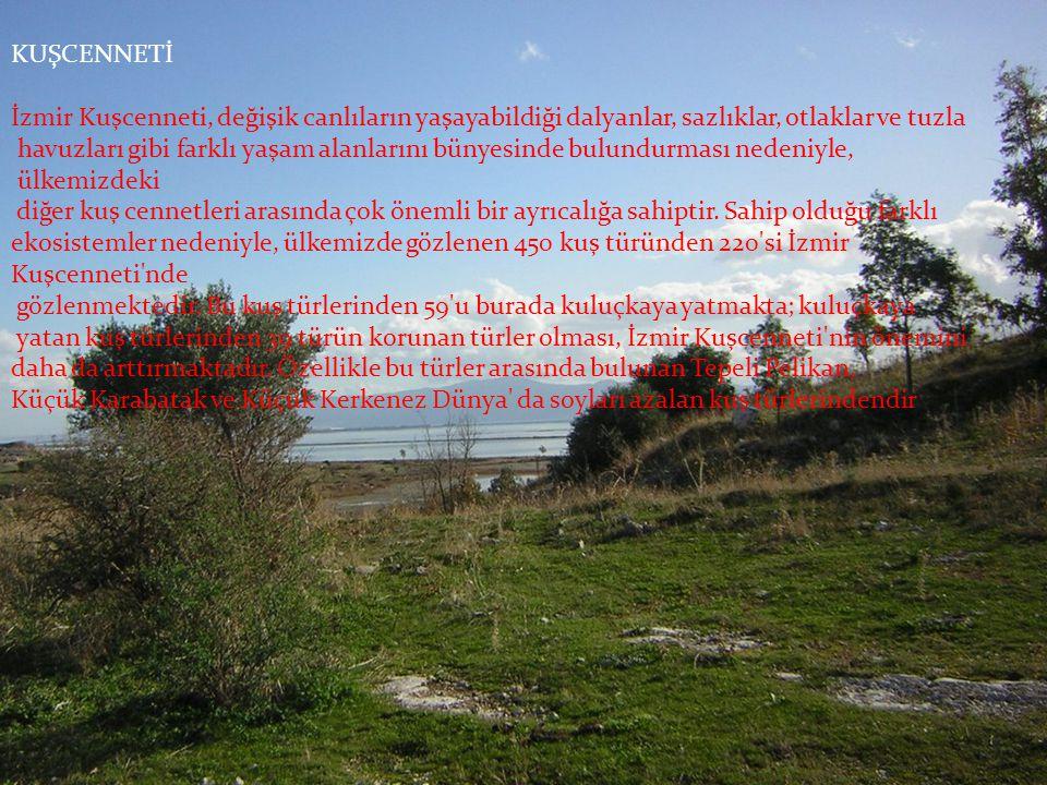 KUŞCENNETİ İzmir Kuşcenneti, değişik canlıların yaşayabildiği dalyanlar, sazlıklar, otlaklar ve tuzla havuzları gibi farklı yaşam alanlarını bünyesind