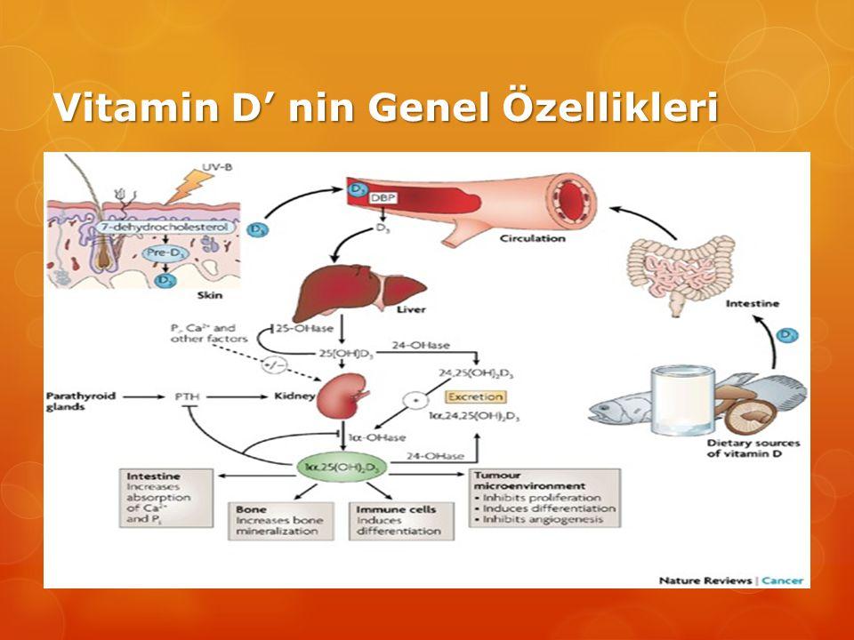 Vitamin D' nin Genel Özellikleri