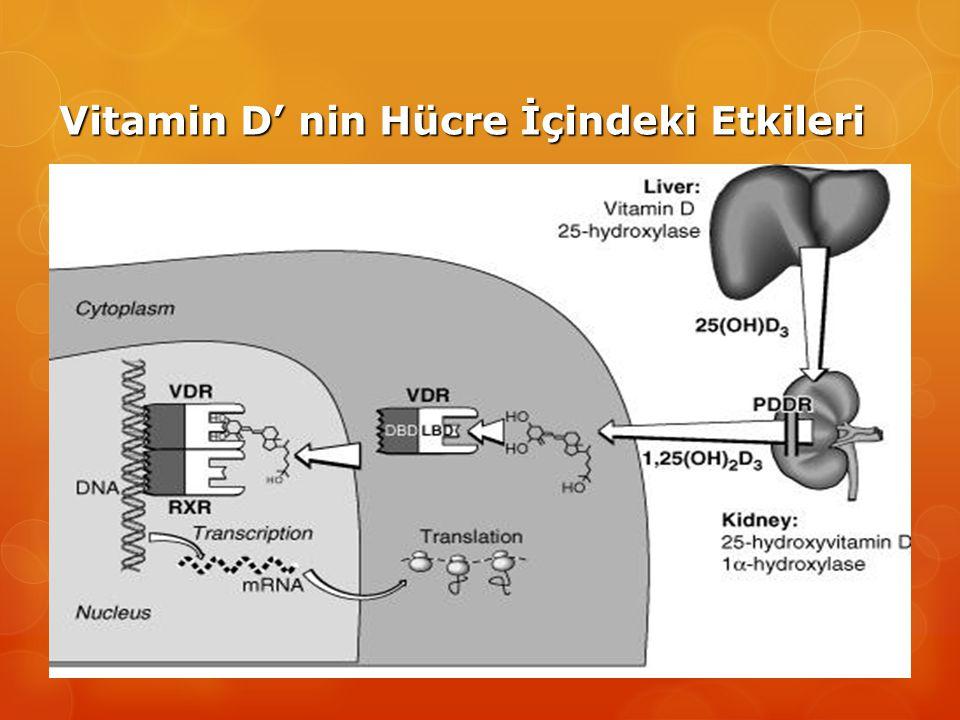 Vitamin D' nin Hücre İçindeki Etkileri