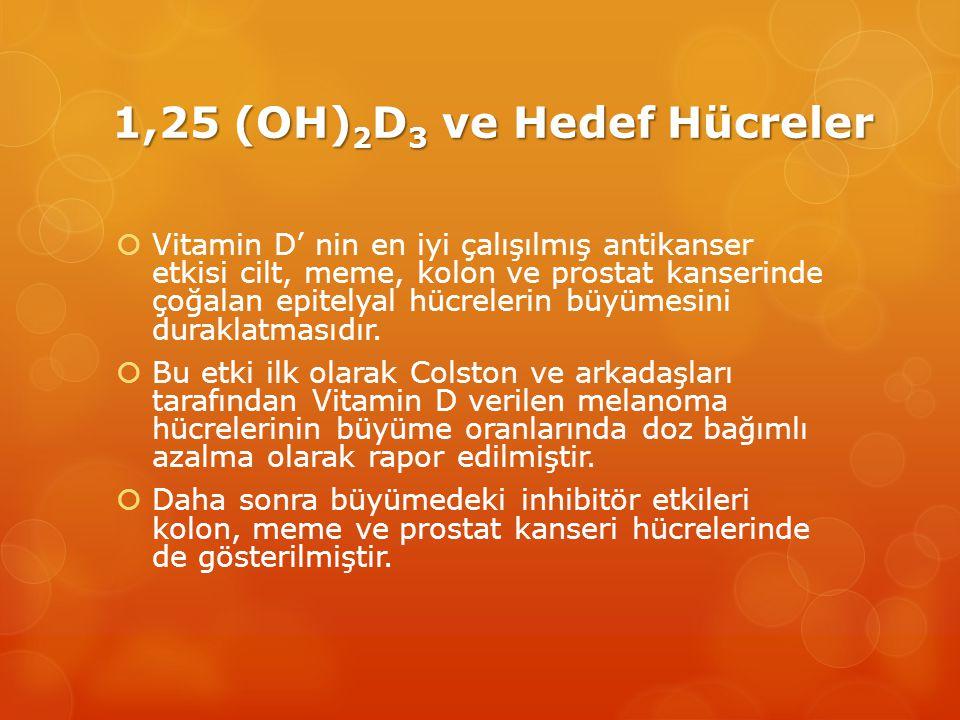 1,25 (OH) 2 D 3 ve Hedef Hücreler  Vitamin D' nin en iyi çalışılmış antikanser etkisi cilt, meme, kolon ve prostat kanserinde çoğalan epitelyal hücrelerin büyümesini duraklatmasıdır.