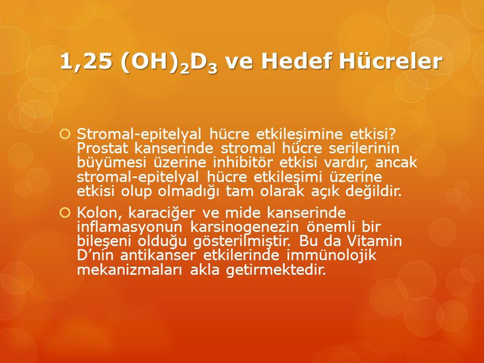 1,25 (OH) 2 D 3 ve Hedef Hücreler  Stromal-epitelyal hücre etkileşimine etkisi.