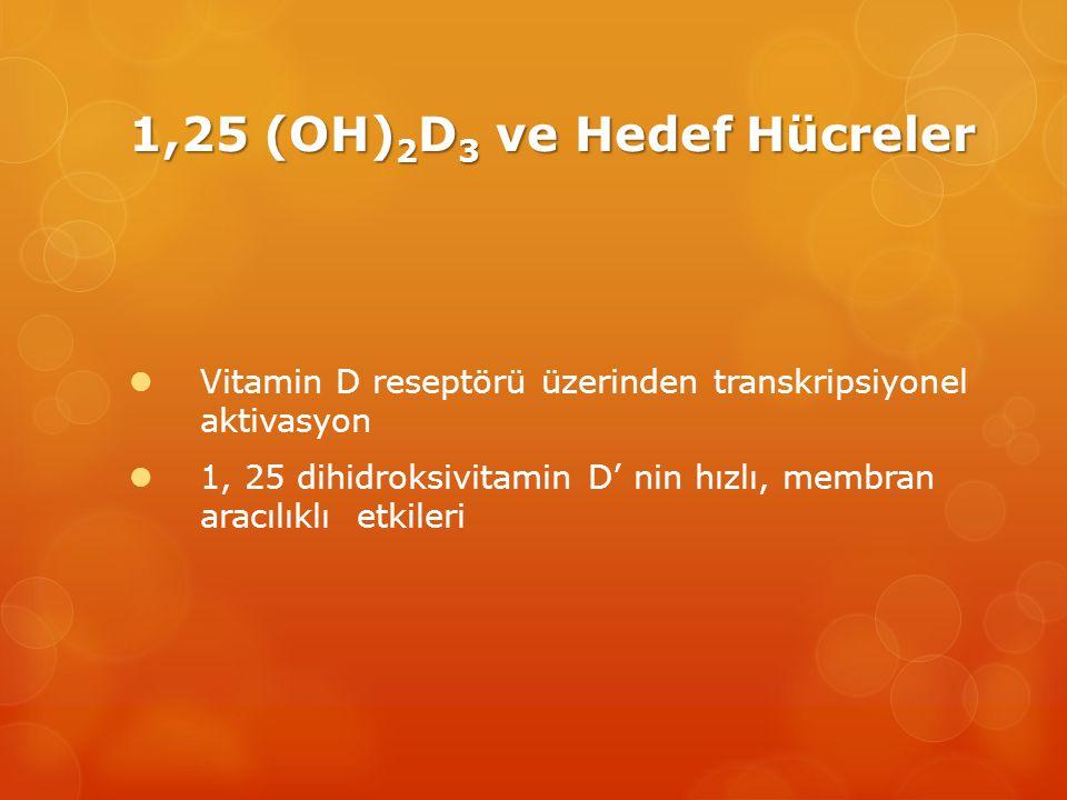 1,25 (OH) 2 D 3 ve Hedef Hücreler  Vitamin D reseptörü üzerinden transkripsiyonel aktivasyon  1, 25 dihidroksivitamin D' nin hızlı, membran aracılıklı etkileri