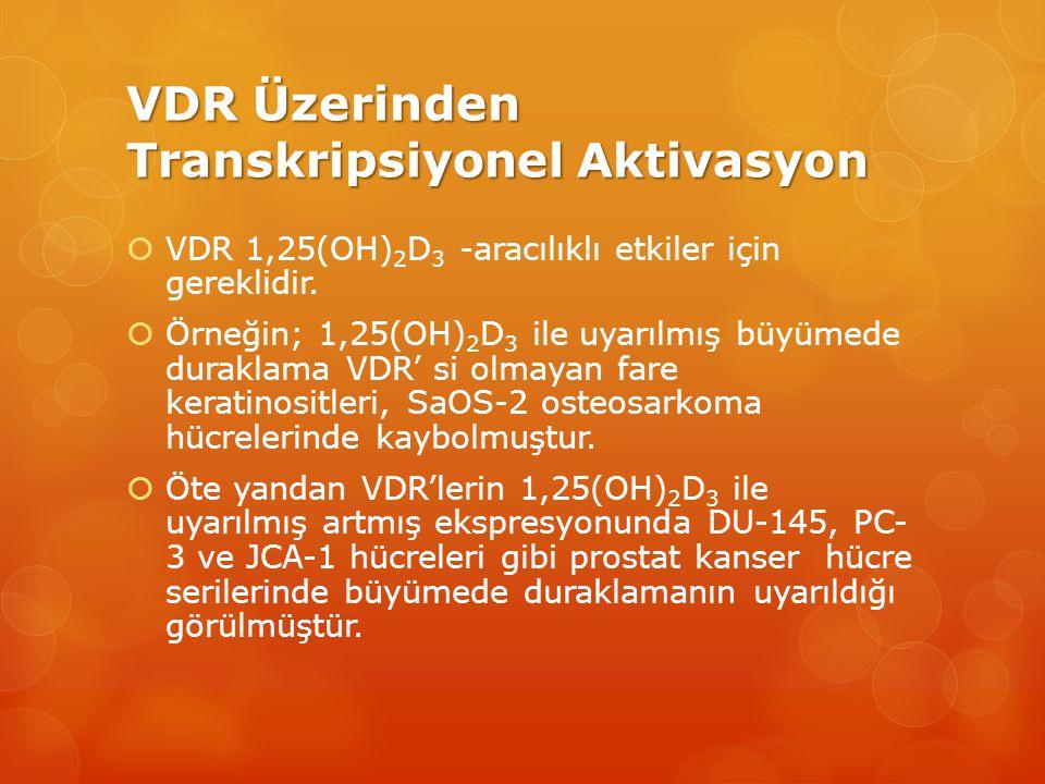 VDR Üzerinden Transkripsiyonel Aktivasyon  VDR 1,25(OH) 2 D 3 -aracılıklı etkiler için gereklidir.
