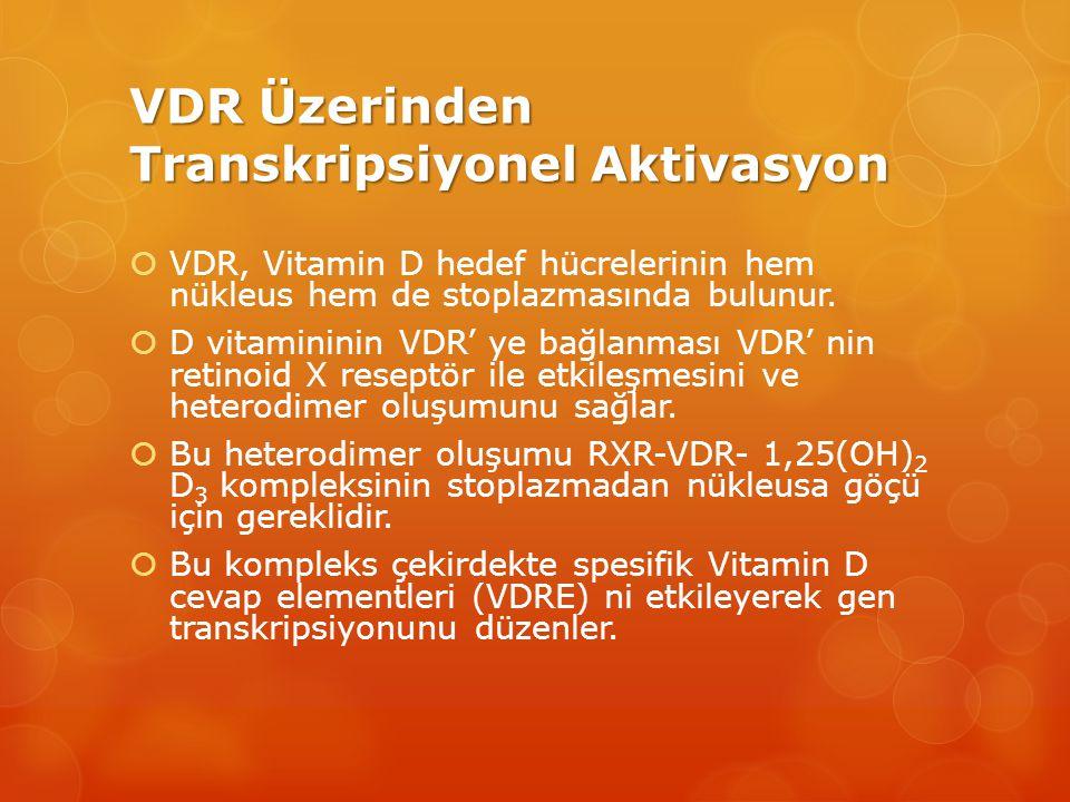 VDR Üzerinden Transkripsiyonel Aktivasyon  VDR, Vitamin D hedef hücrelerinin hem nükleus hem de stoplazmasında bulunur.