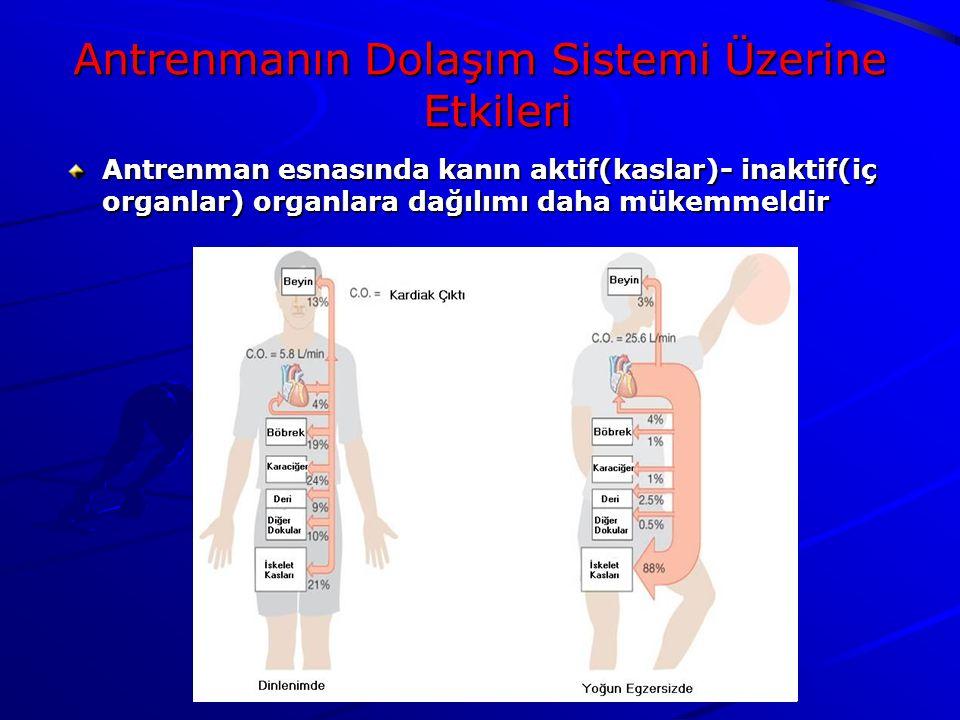 Antrenman esnasında kanın aktif(kaslar)- inaktif(iç organlar) organlara dağılımı daha mükemmeldir Antrenmanın Dolaşım Sistemi Üzerine Etkileri